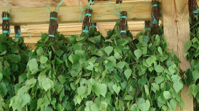Продам березовые веники для бани