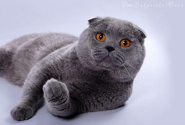 Ищем кота на вязку