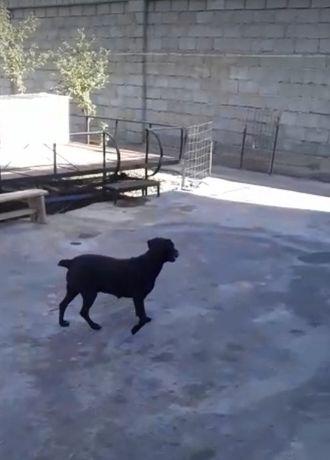 Собака для охота