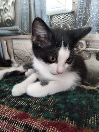 Котенок в Павлодаре ищет дом.