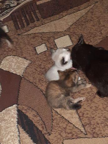 Отдам котят 4 девочки