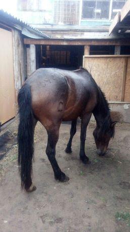 Продам лошадь 3.5 года!