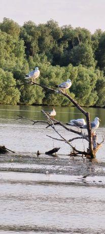 Excursii în Delta Dunării