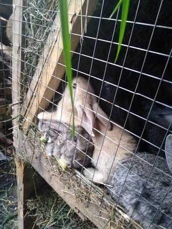Кролики возраст 1 месяц
