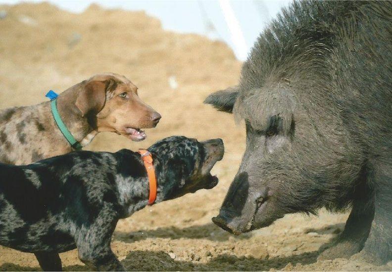 GPS tracker Проследяващо устройство за куче джи пи ес, лов