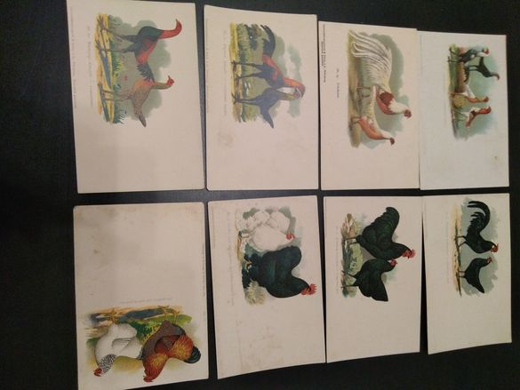 Антикварни картички с птици около 1910г