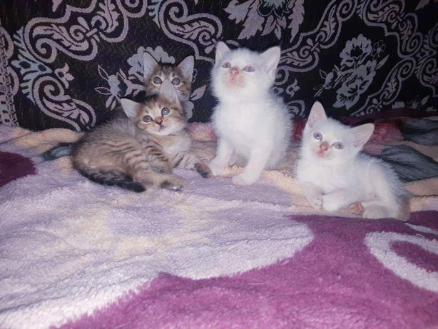 Симпатичные милые котята