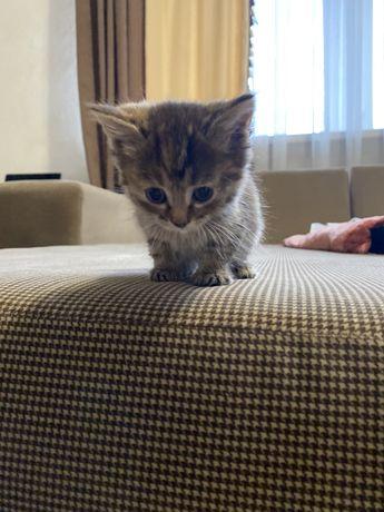 Дарим котят