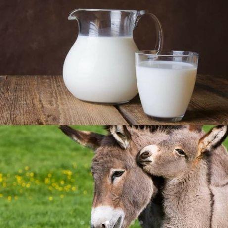 vand lapte de magarita foarte bun pentru boli