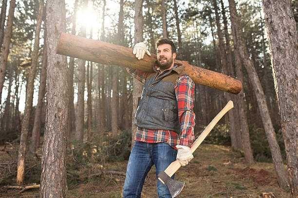 Servicii gradinarit gradinar si lemnar