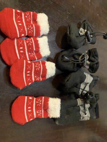 pantofi catei mici