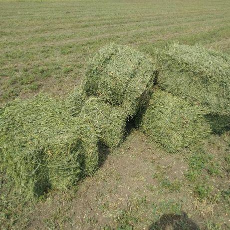 Жоңышқа сатам бағасы 1300 тенге