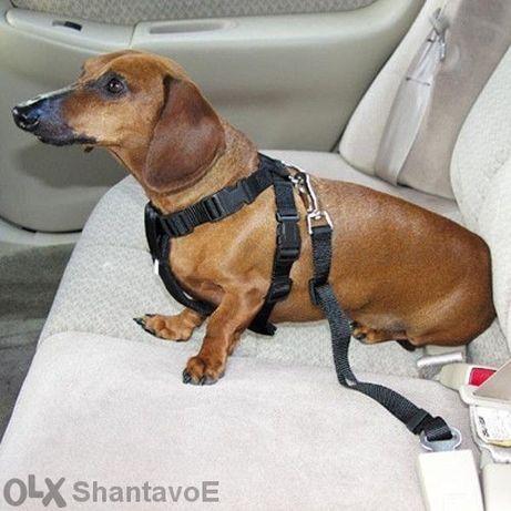Предпазен колан за кола за домашен любимец (котка , куче)