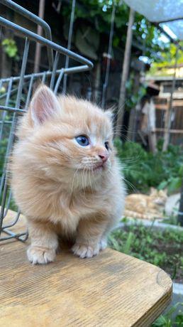 Котята,четыре штуки рыжие два один серый, и один черный
