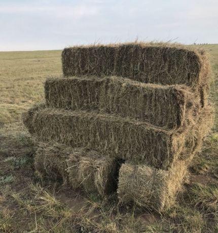 Продам степное сено разнотравье в тюках