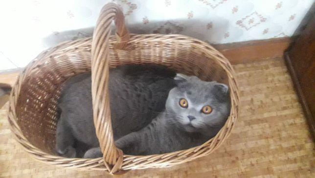 Потерялся кот. Любимчик.