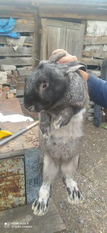 Обмен на другого крола