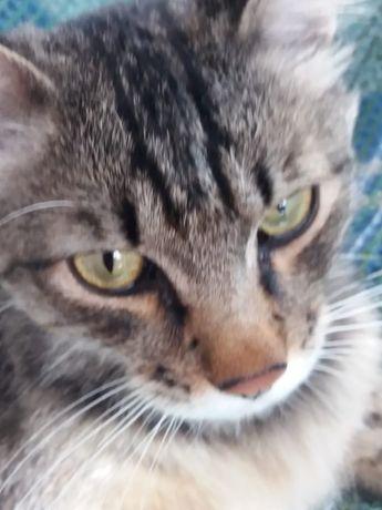 Найден молодой кот