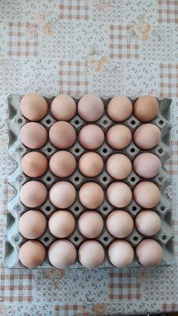 Яйца от домашни, свободни кокошки.