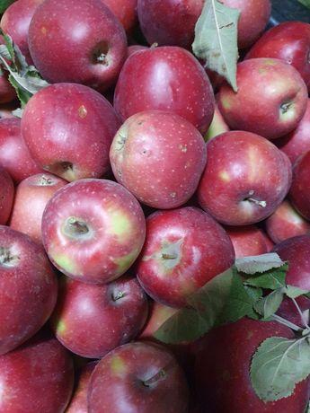 Яблоки груши продам