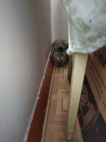 Кошка Мася ищет добрые руки