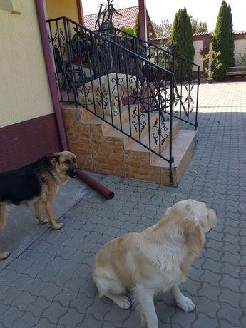 Pensiune canina(găzduire)
