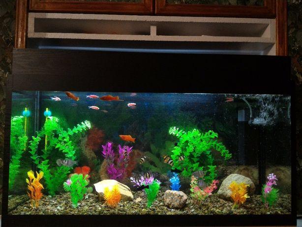 НОВЫЕ Аквариумы 24 48 69 л с рыбами и пустые с крышкой и подсветкой