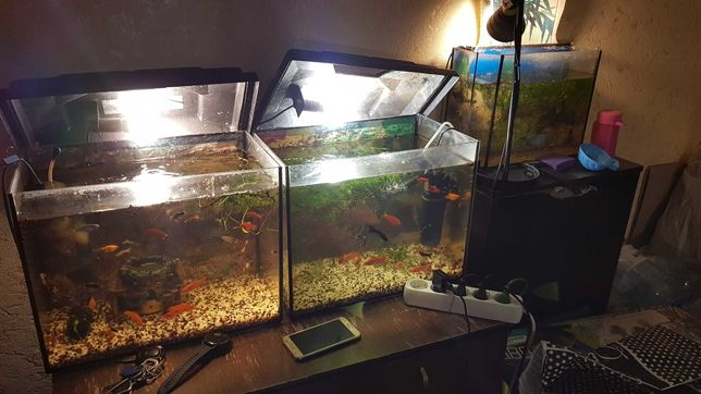 Аквариум. Рыбки для аквариума