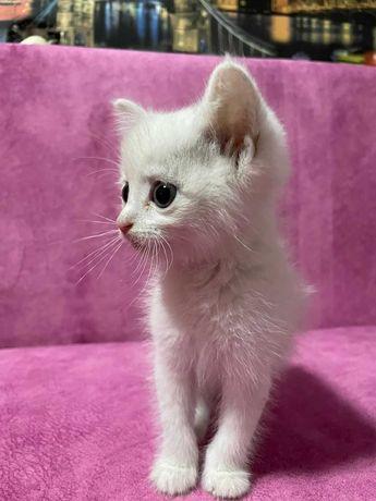 Отдам в хорошие руки, маленького котенка.Мальчик,отдам даром