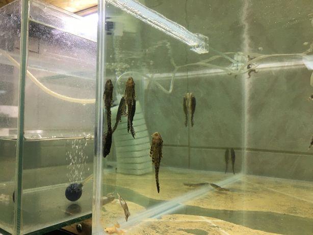 Pestisori de acvariu si hrana de orice fel