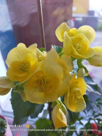 Продам цветы комнатные