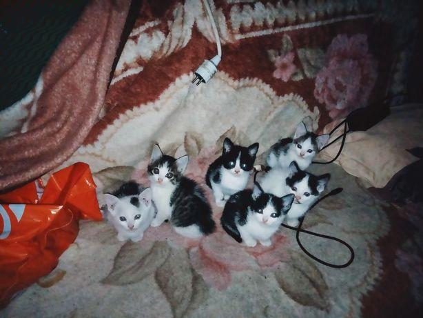 Donez pisicuți cuminți
