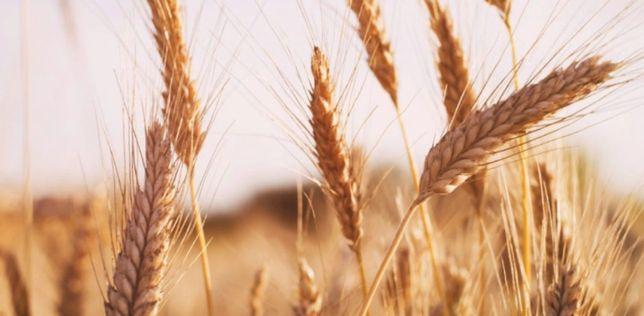Продам сельхоз землю