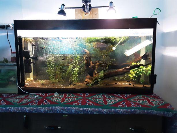 Продам 4 аквариума с рыбками аквариумы 20 ,50 , 60,250 литров