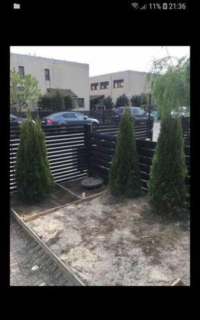 Plante ornamentale pentru gradina dumneavoastră