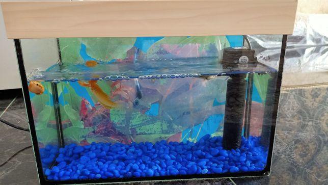 Продам аквариум 10 литров с рыбками и улитками, новый!