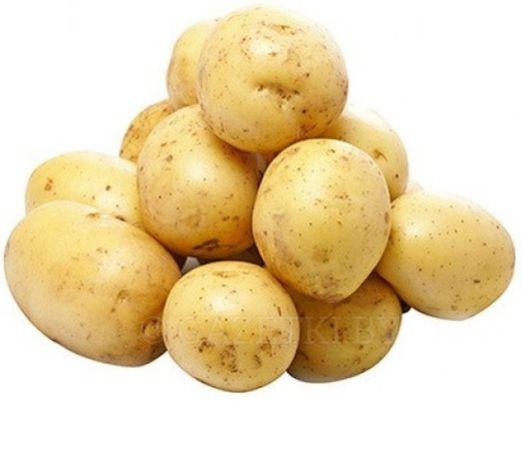 Продаю картофель семена