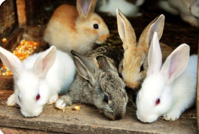 Продам кроликов 2000