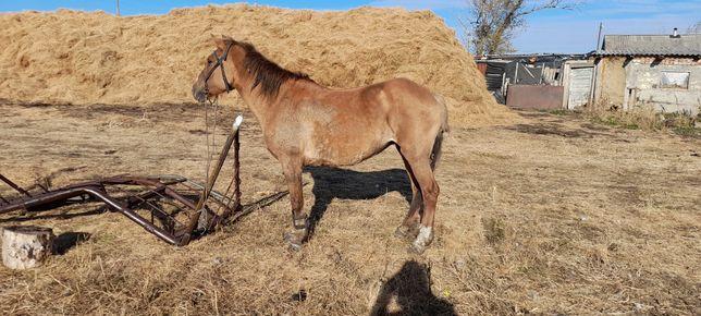 Продам лошадь обученная