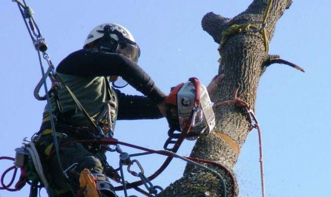 Tăiere copaci evaluare pe watap program12/24h