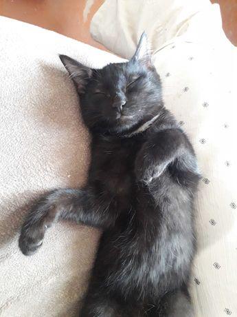Молодой кот для одинокого человека