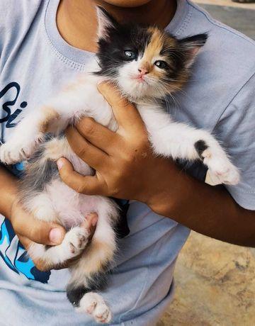 Котята полосатые и пятнистые