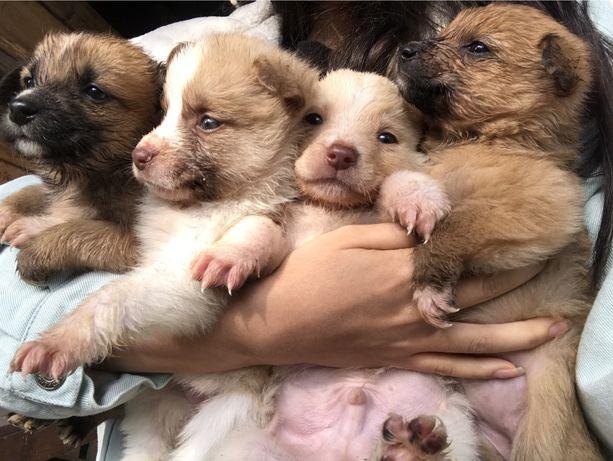 Отдам щенка (или нескольких)в добрые руки