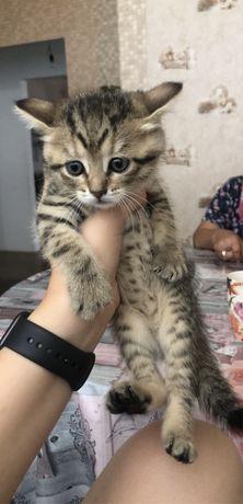 Игривые котята)