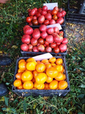 Продам помидоры желтые розовые срочно