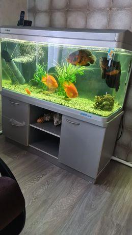 Продам аквариум и рыбок