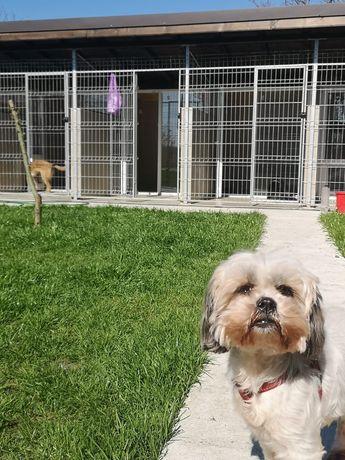Cazare căței pe termen lung la pensiunea canină Apache
