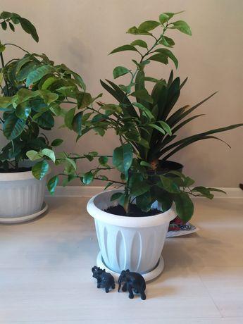 Растение для дома