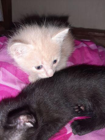 Котёнок мальчик рыженький