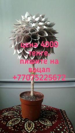 Срочно продаю денежное дерево
